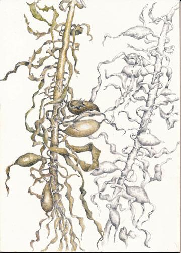 seaweed_final_web