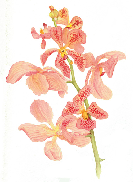 orchid_web