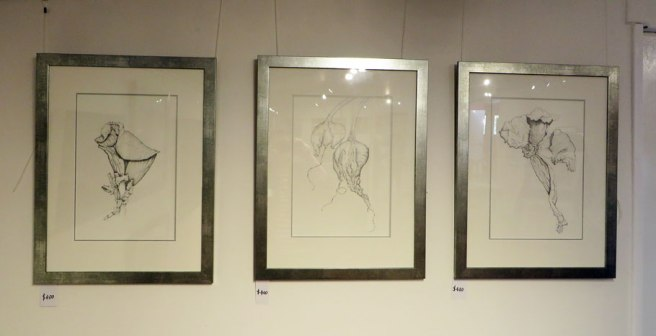 Pencil drawings, exaggerated flower and pod forms