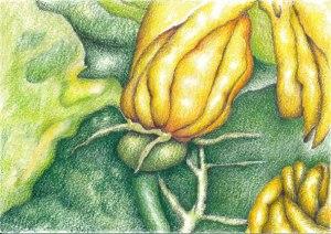 zucchini3web