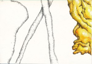 zucchini5web