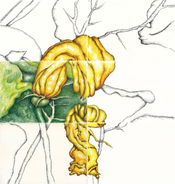 zucchini_allweb
