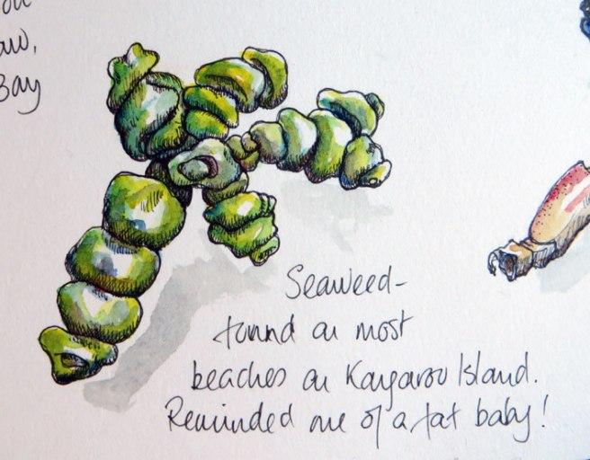 seaweed_web