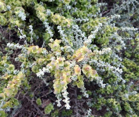 greenPlantweb