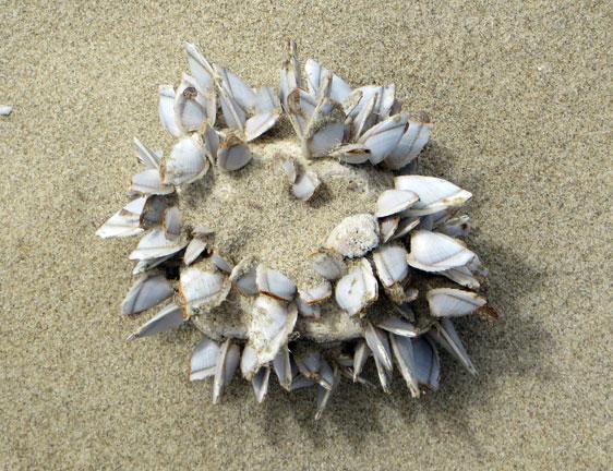 shellweb