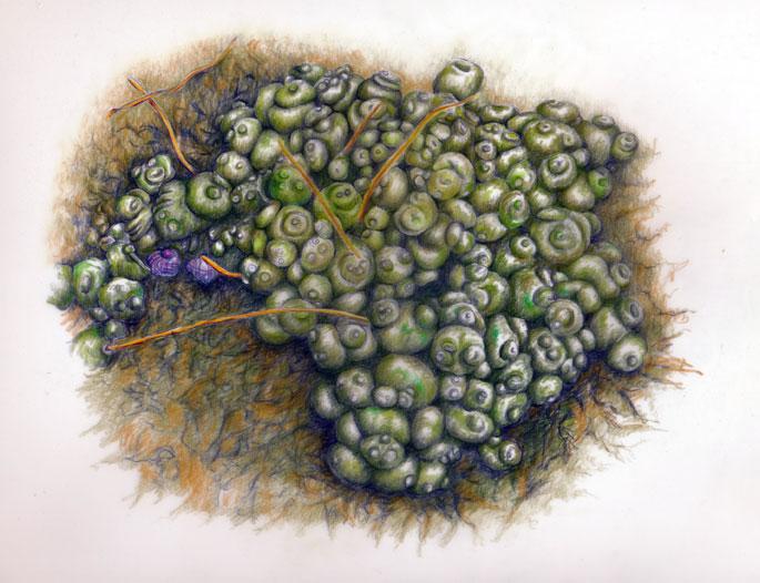 Seaweed_babiesweb