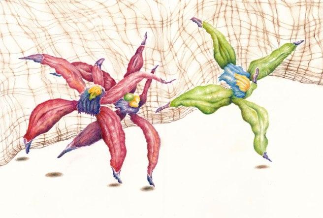 orchid_danceweb