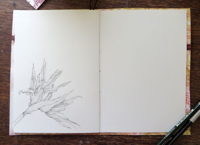 The spread that we all contribute to - my drawing is of the seed head after the seeds have gone.